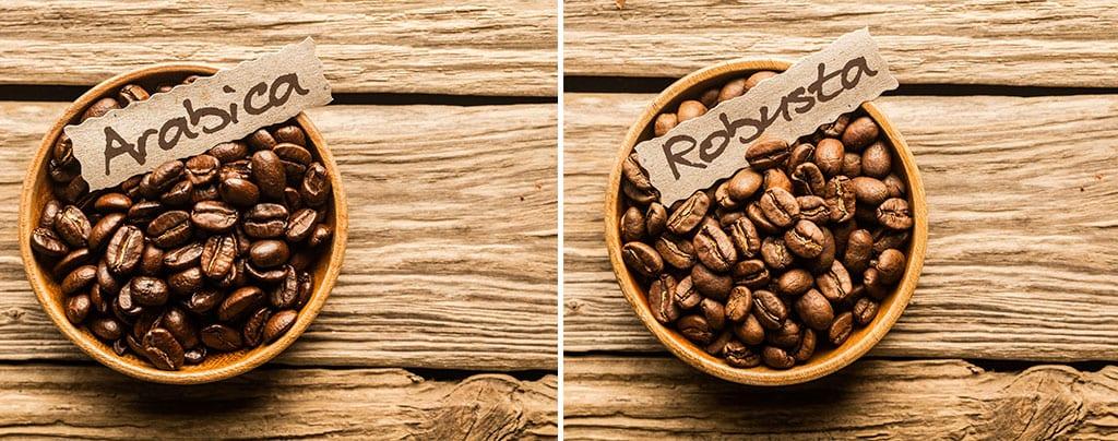 פולי קפה ערביקה או רובוסטה