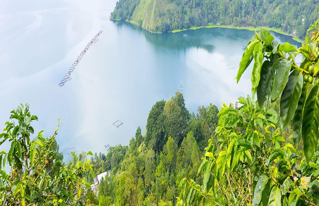 תמנות נוף אינדונזיה