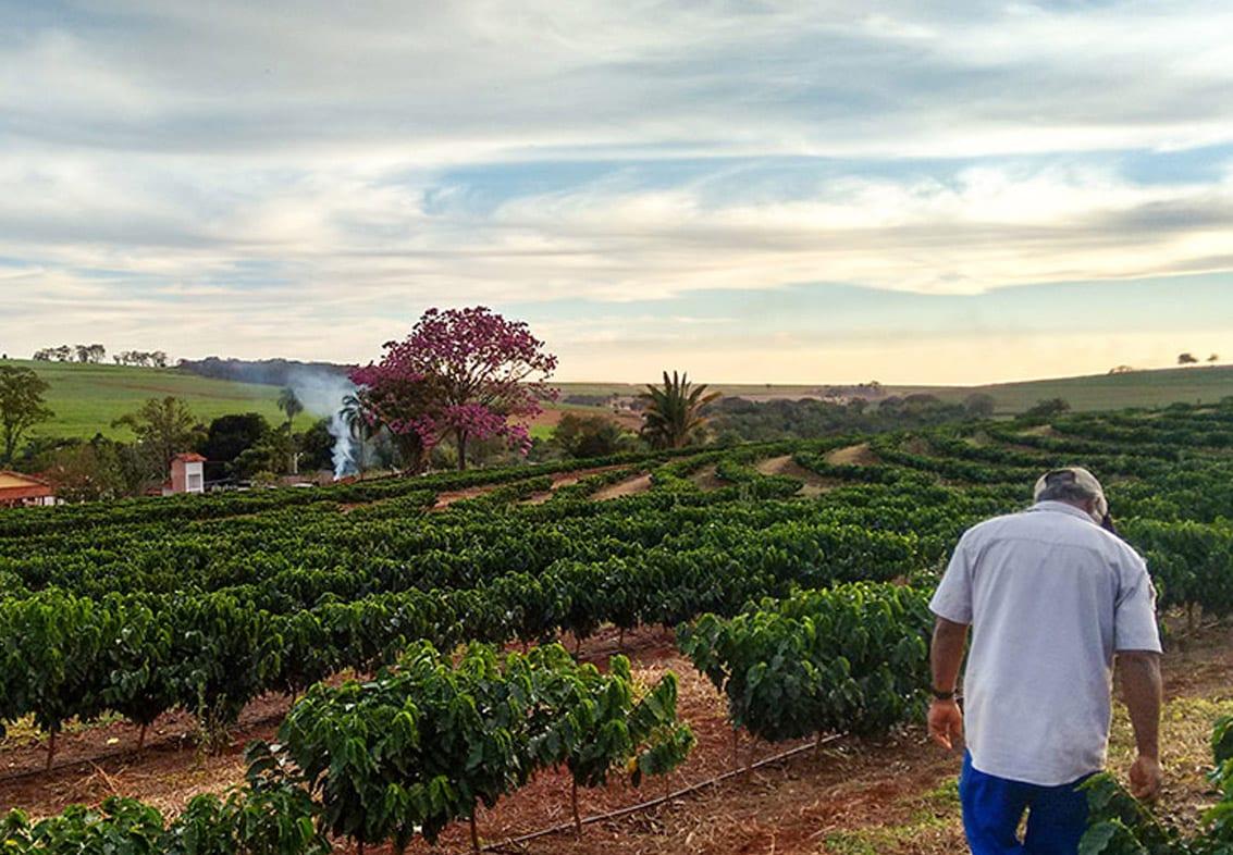 קפה ברזילאי
