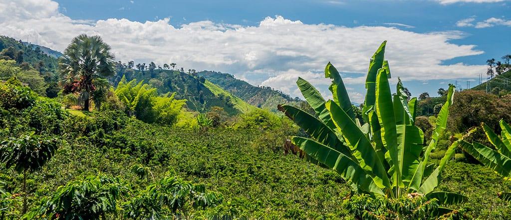 קולומביה נוף