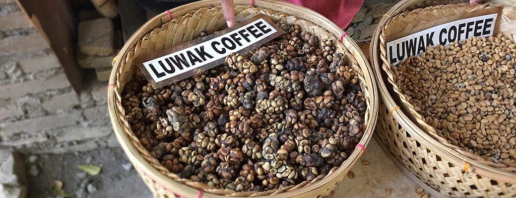 סוגי קפה באינדונזיה