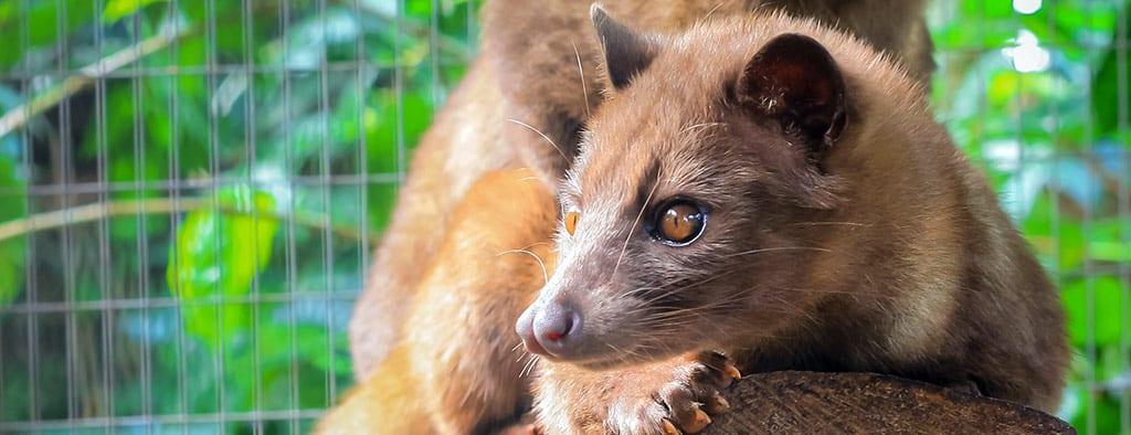 חיה באינדונזיה