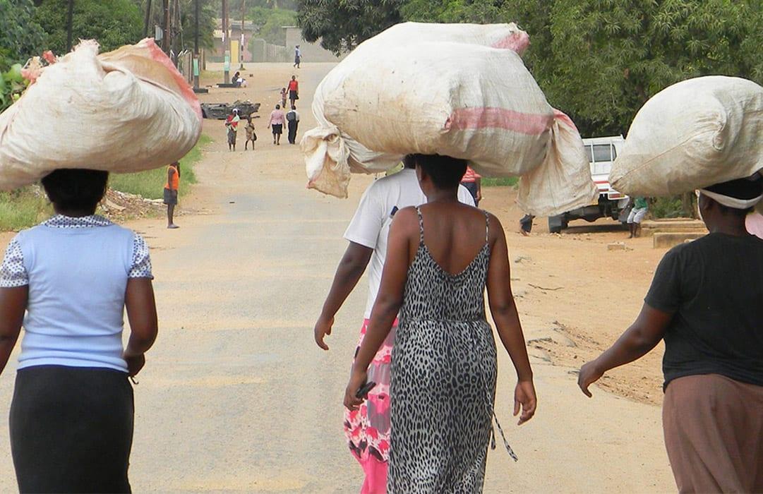 זימבאבואה סחיבת שקי קפה ממטעי קפה